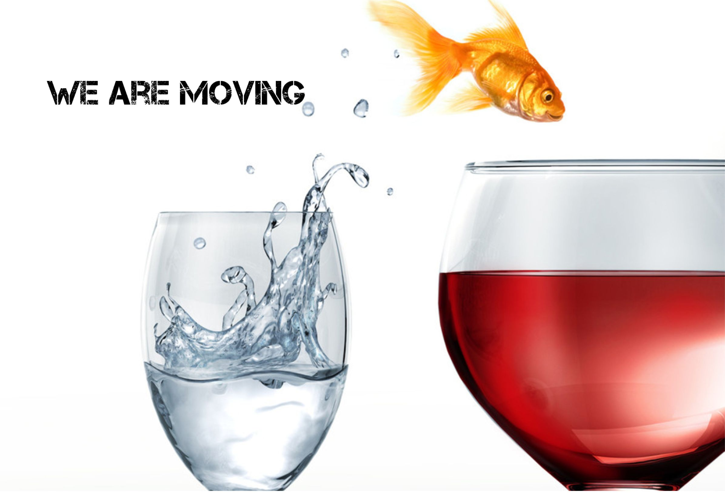 We have moved! fish jumping from one water to wine.